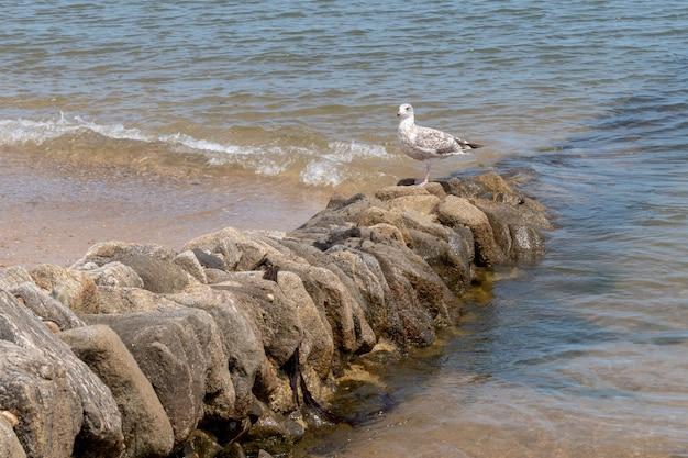 Zeekustvogel op oren van anti-erosierotsen