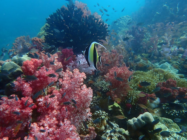 Zeeleven onder zeewater