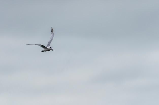 Zeemeeuw die in de haven van howth vliegt.
