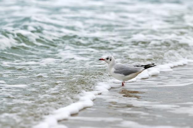 Zeemeeuw die langs kust loopt