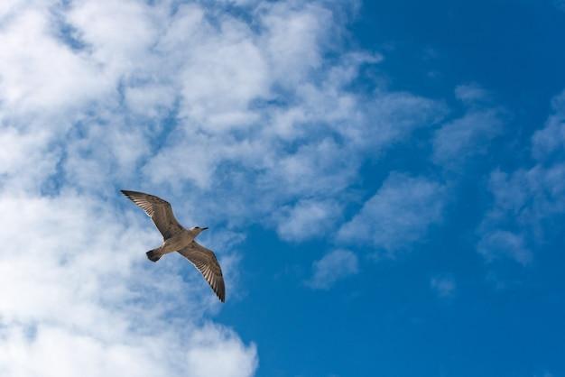 Zeemeeuw die op de blauwe hemelachtergrond vliegt