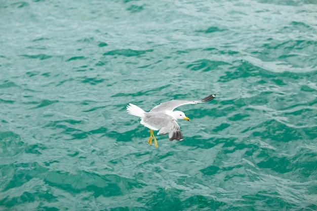 Zeemeeuw die op de blauwe zee vliegt.