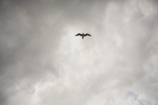 Zeemeeuw die op duidelijke blauwe hemel en zonlicht vliegt.