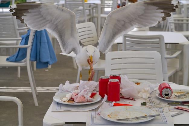 Zeemeeuw die op een restaurantlijst eet