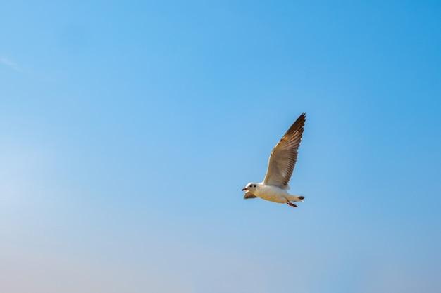Zeemeeuw die op het overzees in thailand vliegt