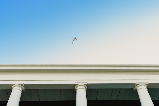 Zeemeeuw die over een oud gebouw met grote kolommen vliegt.