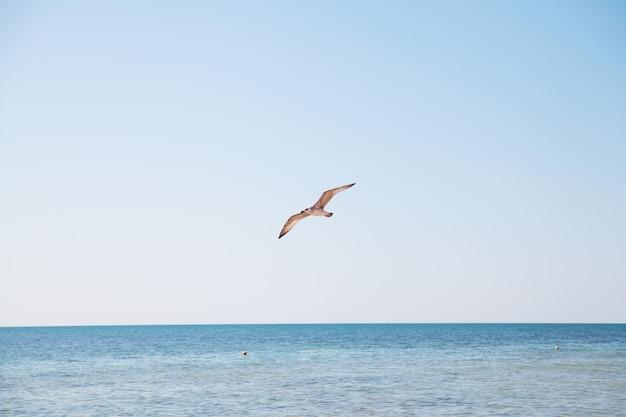 Zeemeeuw die over het blauwe overzees vliegt.