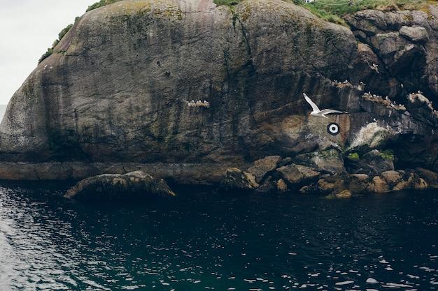 Zeemeeuw die tussen de rotsen van de noordzee vliegt een mistige en koude dag.
