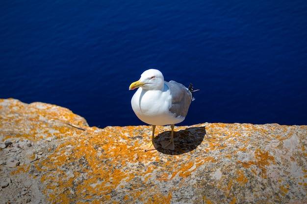Zeemeeuw die zich op de rand van een klip met een donkerblauwe zee bevindt