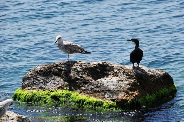 Zeemeeuw en zee-eend op een grote steen. vogels op de achtergrond van zeegolven.