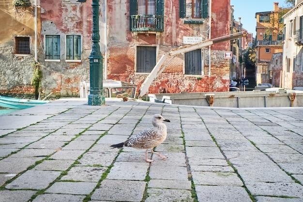 Zeemeeuw in venetië, dichtbij het kanaal