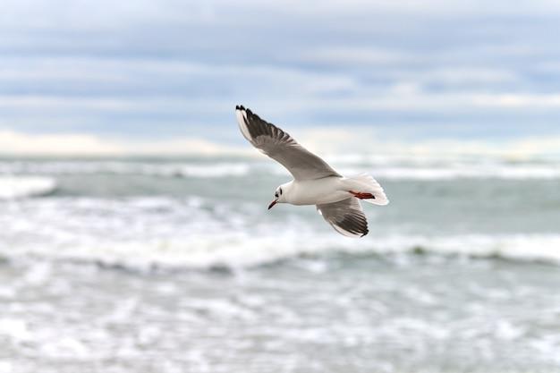 Zeemeeuw, meeuw die over zee vliegt. close-up van zwevende witte vogel op natuurlijke blauwe achtergrond.