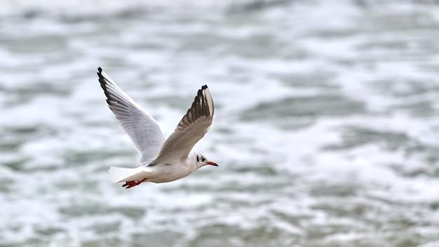 Zeemeeuw, meeuw die over zee vliegt. zeegezicht van zwevende witte vogel op natuurlijk blauw water Premium Foto