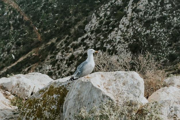 Zeemeeuw neergestreken op een rots omgeven door groen in calp, spanje