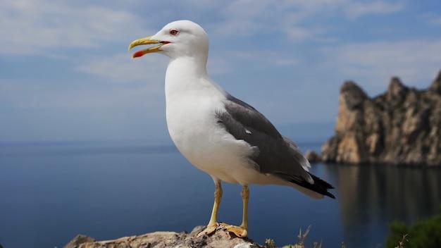 Zeemeeuw op de kust close-up van witte vogels meeuwen