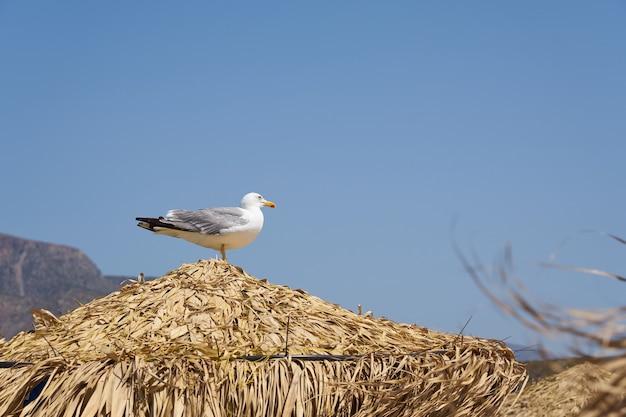 Zeemeeuw op de natuurlijke droge strandschaduw tegen een blauwe hemel.