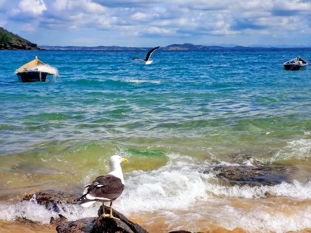 Zeemeeuw op de rotsen van het strand