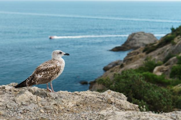 Zeemeeuw op een rots, tegen de blauwe zee met een motorboot.