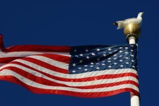 Zeemeeuw op vlaggenmast