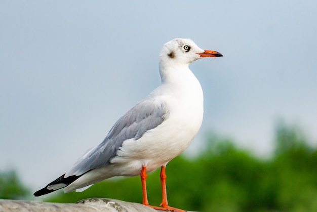 Zeemeeuw staande op de brug, vogel vliegt over de zee, seagull zweven over de diepblauwe zee.