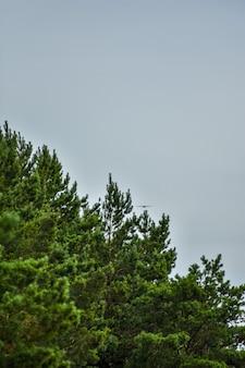 Zeemeeuw vliegt door de blauwe lucht