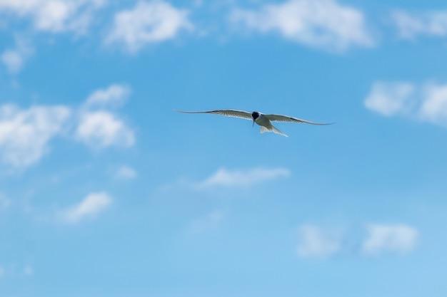 Zeemeeuw vliegt hoog in de lucht bij helder zonnig weer
