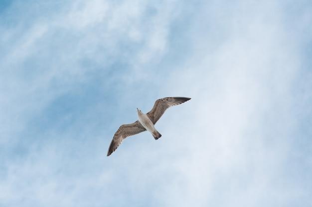 Zeemeeuw vliegt op blauwe hemel met wolken