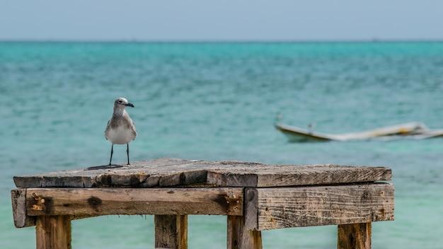Zeemeeuw zat op een houten blok aan de kust van de zee