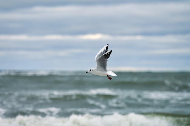 Zeemeeuw, zeemeeuw die over zee vliegt. zeegezicht van zwevende witte vogel op natuurlijk blauw water