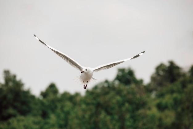 Zeemeeuwen die hoog vliegen met wijd gespreide vleugels naar licht tegen een blauwe lucht, inspirerend concept van vrijheid en aspiratie