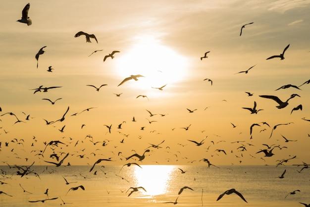 Zeemeeuwen die in de avond vliegen.