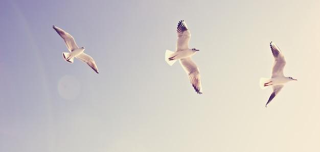 Zeemeeuwen die in de blauwe hemel vliegen