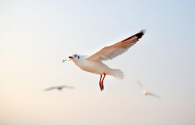 Zeemeeuwen die in de hemel bij zonsondergang vliegen.