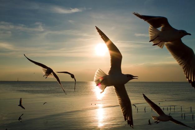 Zeemeeuwen die in het overzees vliegen de avondzonsondergang