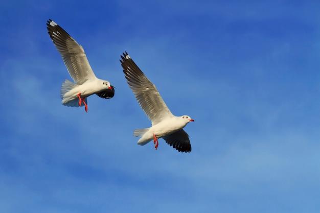 Zeemeeuwen die op blauwe hemelachtergrond vliegen