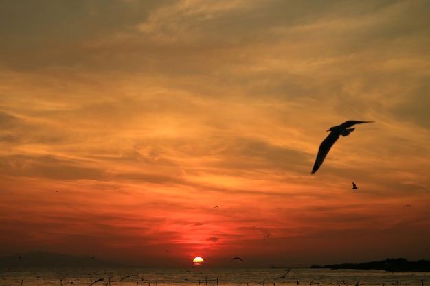 Zeemeeuwen die op de mooie zonsopganghemel over de golf van thailand vliegen