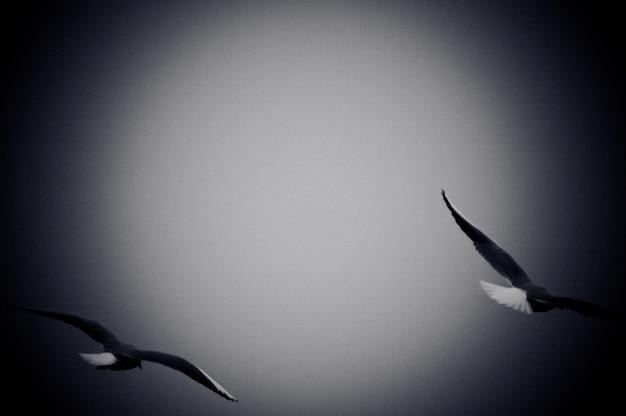 Zeemeeuwen die over zee vliegen. zwart-witte foto met filmkorrel effect