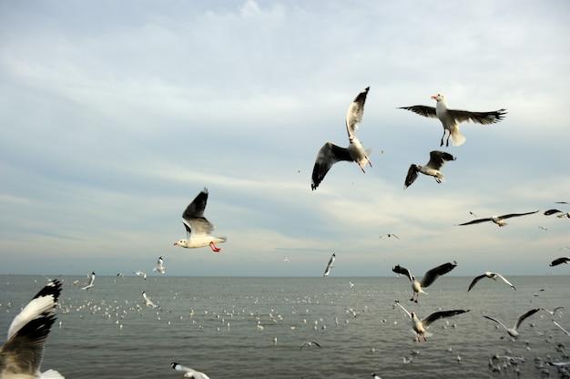 Zeemeeuwen in het water en vliegen in de lucht vóór zonsondergang, geselecteerde focus