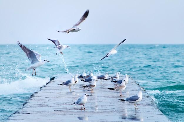 Zeemeeuwen op de pier