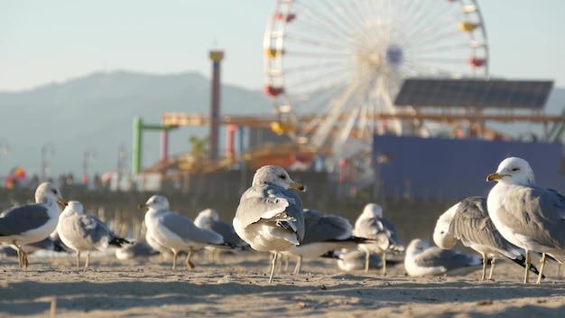 Zeemeeuwen op het zonnige zandstrand van californië, klassiek reuzenrad in pretpark op pier in santa monica