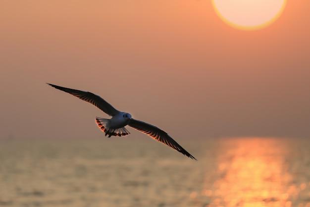Zeemeeuwen vliegen bij zonsondergang.