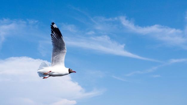 Zeemeeuwen, vogels, symbolen van vrijheid en vrede, spreidden vleugels uit die in de lucht in een brede blauwe hemel vliegen.