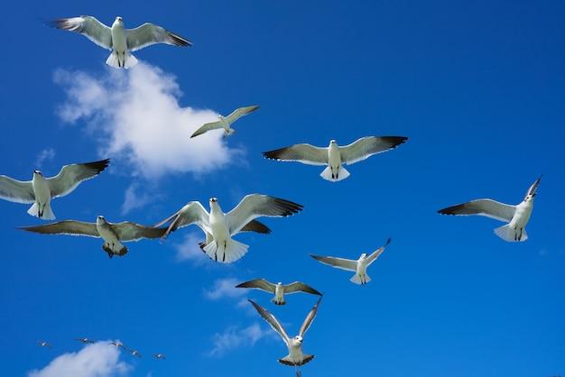 Zeemeeuwen zeemeeuwen die op blauwe hemel vliegen
