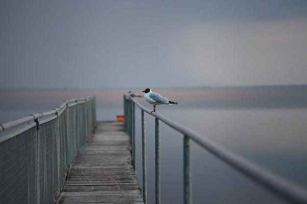 Zeemeeuwportret tegen kust. close-up van witte vogel zeemeeuw zittend aan het strand. wilde zeemeeuw met natuurlijke grijze achtergrond.
