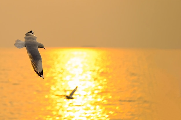 Zeemeeuwvlieg over de zonsondergangreis in thailand