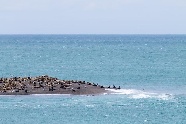 Zeeolifanten op het strand van caleta valdes, patagonië, argentinië argentijnse dieren in het wild