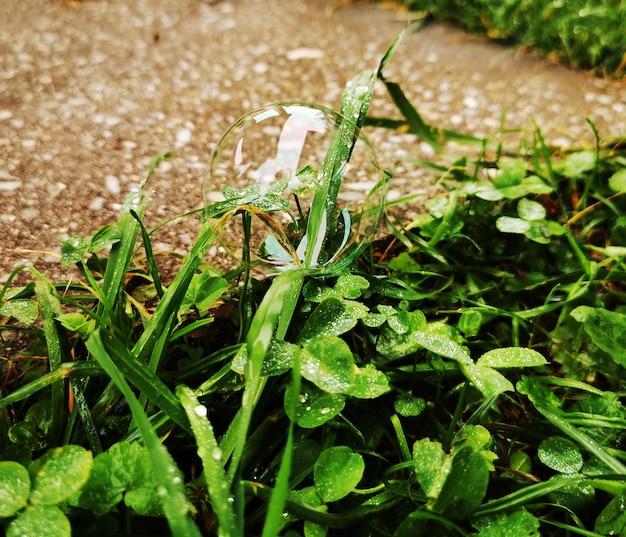 Zeepbel met witte schittering ligt op groen gras