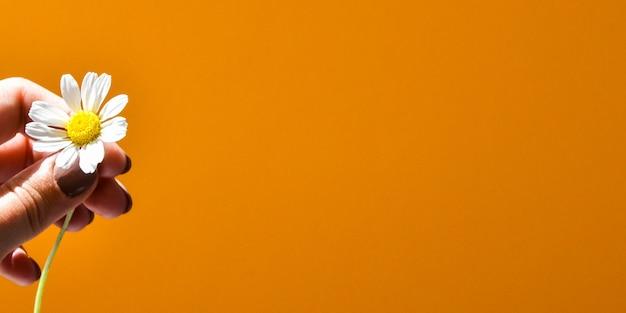 Zeer close-up van kleine madeliefjes bloemen in de hand op fel oranje