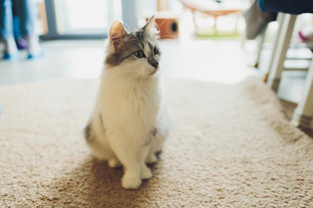 Zeer grappige kat die van dichtbij lacht.