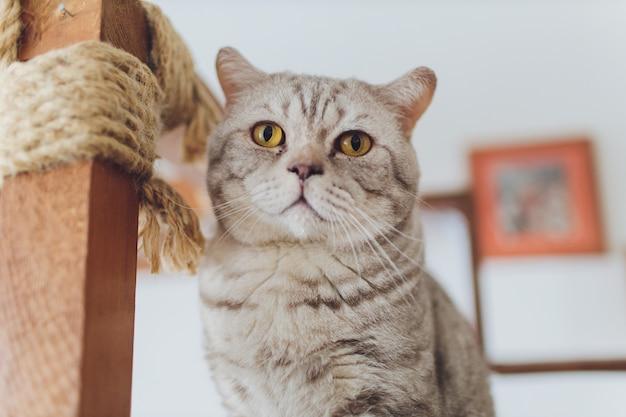 Zeer grappige kat die van dichte omhooggaand lacht.
